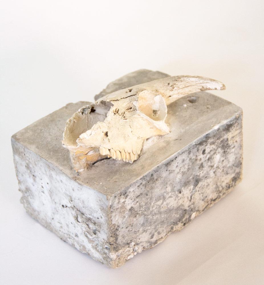 Animal skull in concrete - Sculpture by Ingrid K Brooker