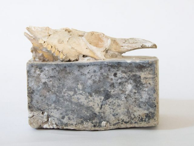 Animal skull in concrete - Sculpture by Ingrid K Brooker